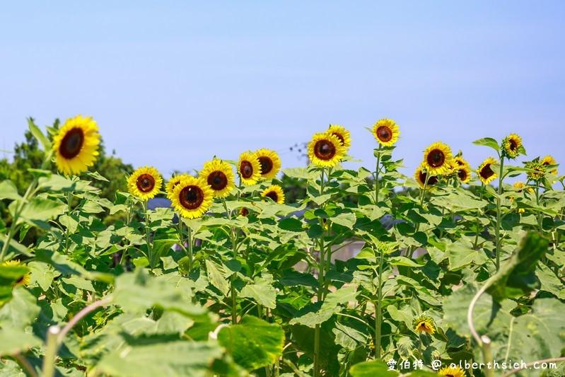 向陽農場.桃園免門票景點