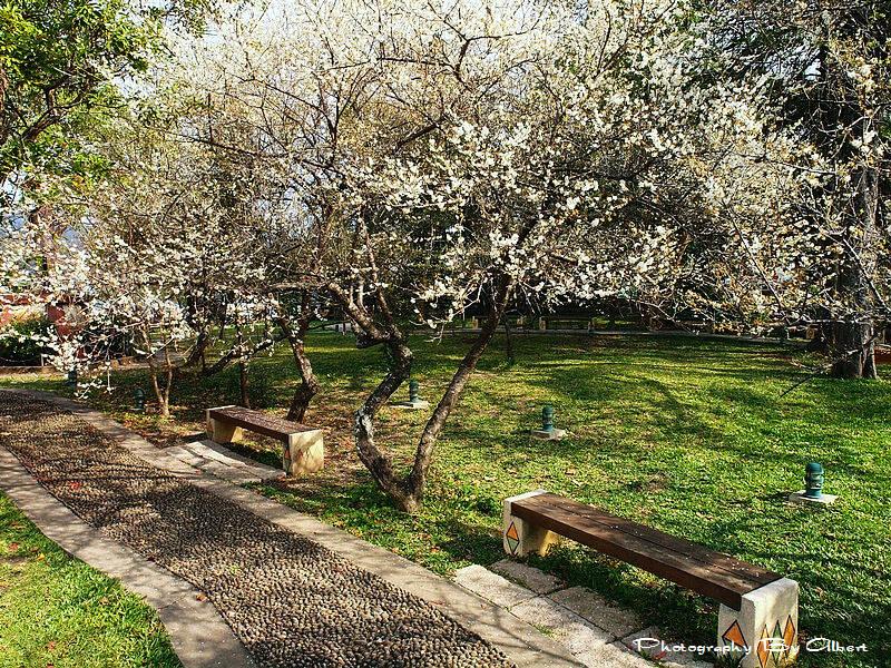 【梅花】桃園復興.角板山公園(賞梅趣) @愛伯特吃喝玩樂全記錄