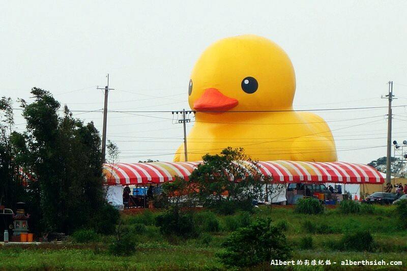 【黃色小鴨】桃園新屋.桃園地景藝術節(埤塘中的三條線黃色小鴨) @愛伯特吃喝玩樂全記錄