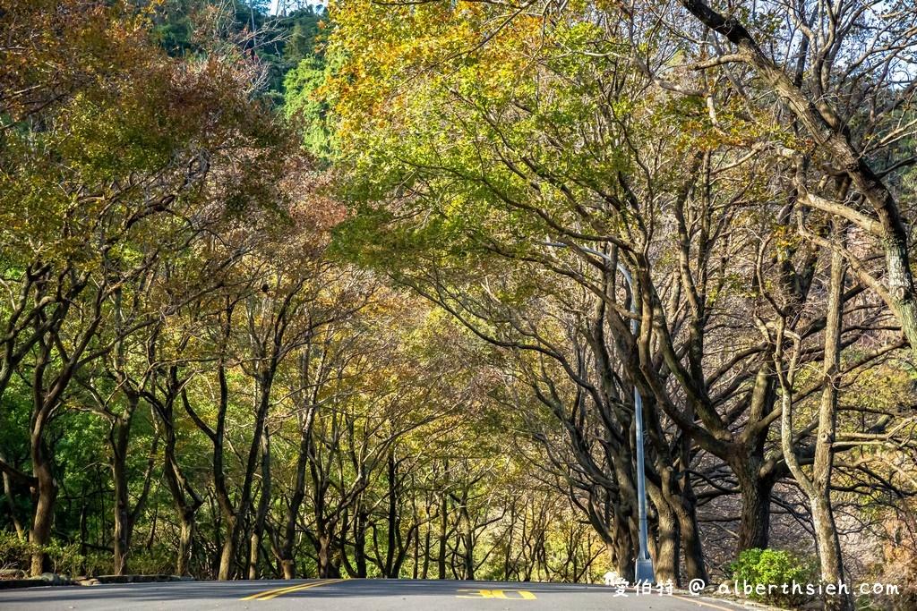 桃園石門水庫楓葉