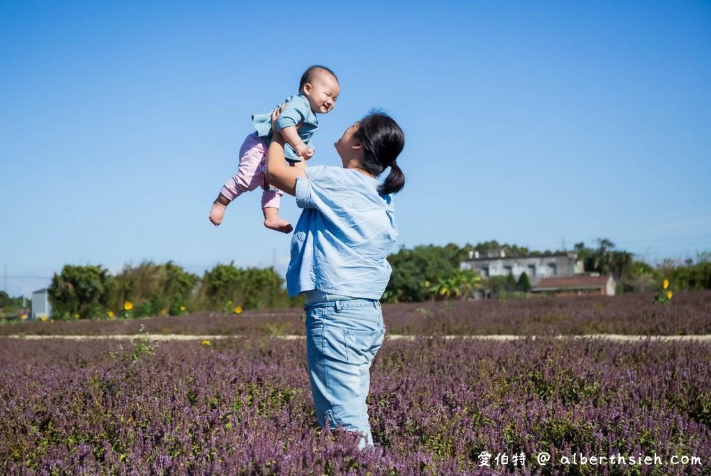 網站近期文章:禾山田仙草花田.桃園新屋景點(除了楊梅這裡也可以一秒來到南法的美麗紫色花海)