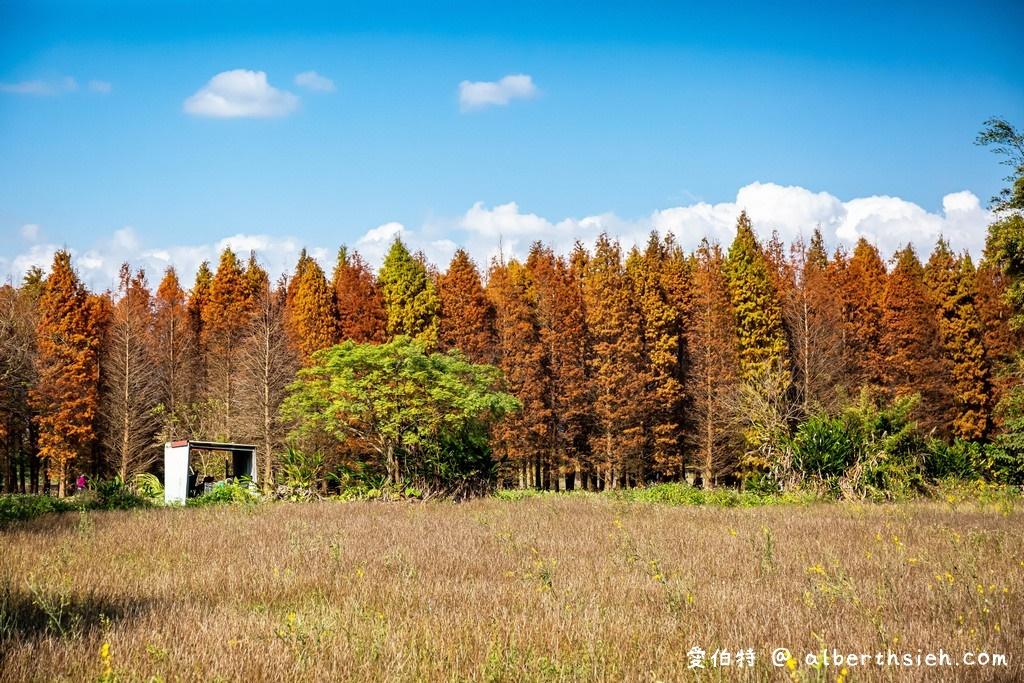 桃園八德落羽松(霄裡壯觀的落羽松森林讓你拍出光與影的美麗意境)
