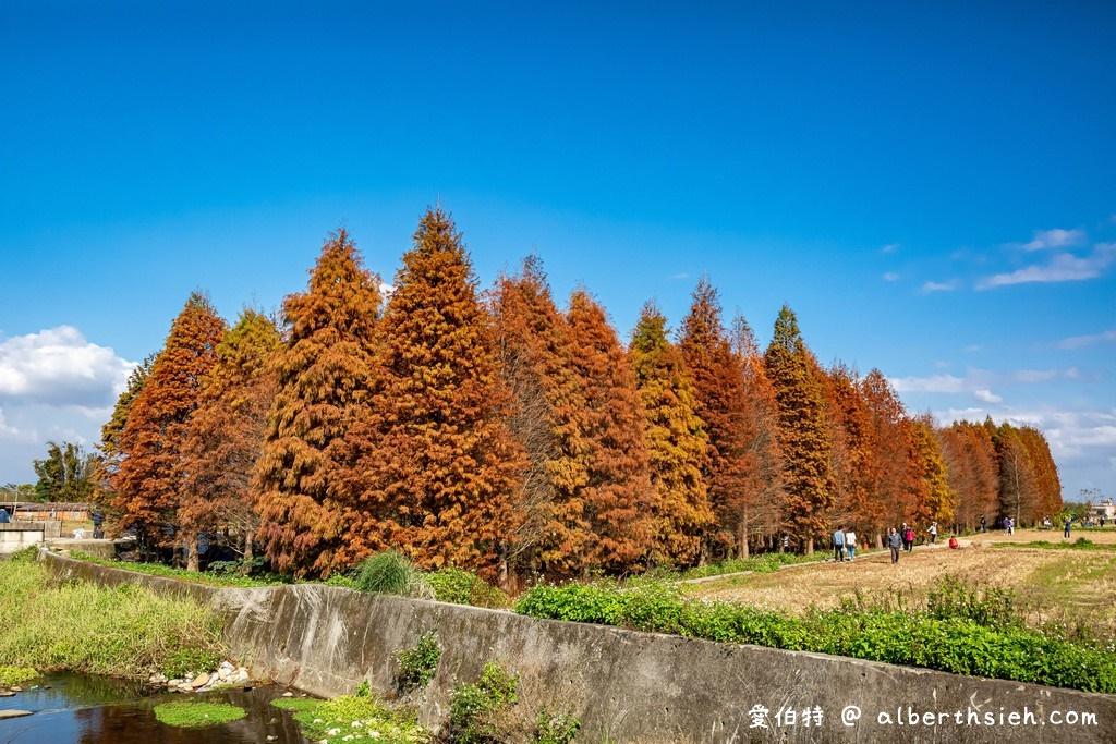 網站近期文章:桃園八德落羽松(霄裡壯觀的落羽松森林讓你拍出光與影的美麗意境)