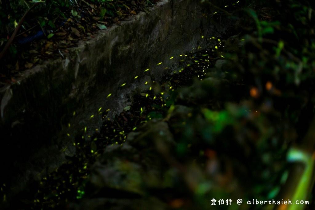 桃園螢火蟲.舊百吉隧道