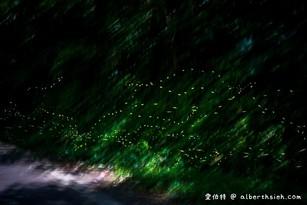桃園螢火蟲舊百吉隧道