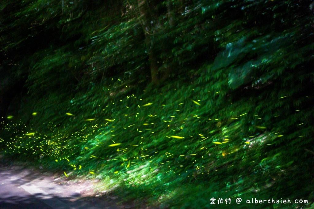 桃園螢火蟲.百吉林蔭步道