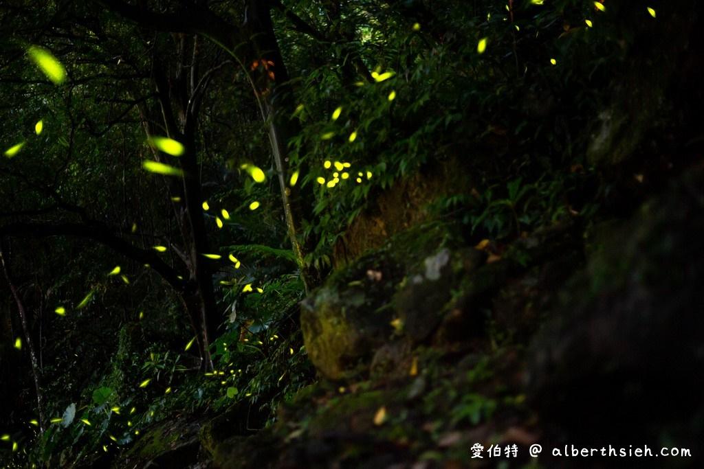 桃園螢火蟲.石門水庫溪洲公園