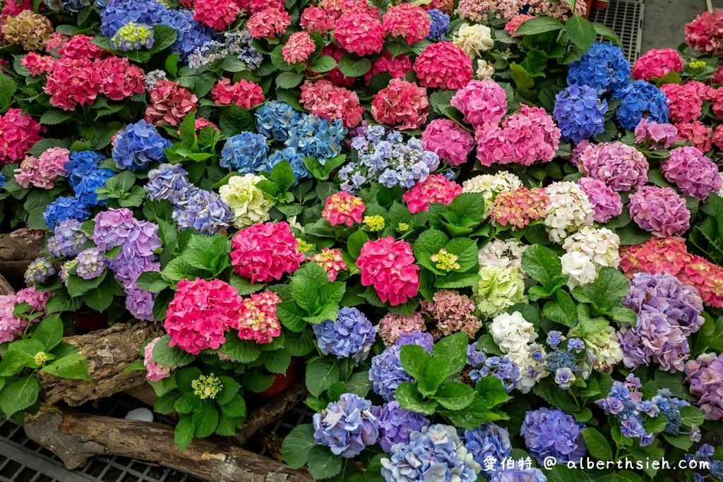網站近期文章:中興花卉農場.桃園花卉農場(免費參觀色彩鮮艷的繡球花以及療癒的多肉植物)