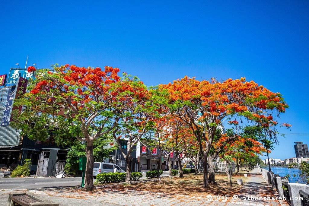 台南運河鳳凰花