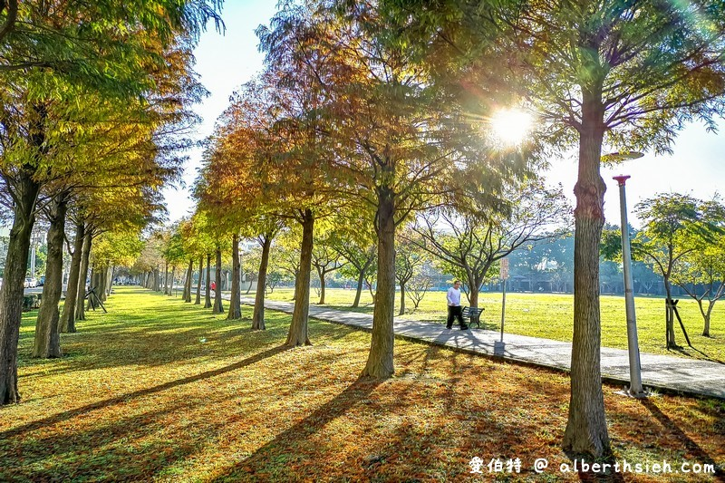 玉山公園落羽松