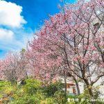 網站近期文章:桃園賞櫻.聖保祿醫院旁(被櫻花包圍的大立收費停車場)