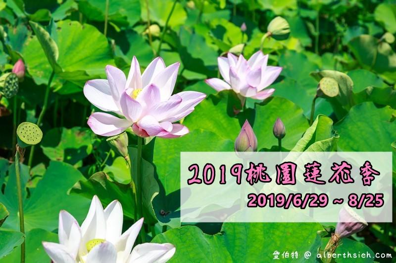 北觀音2019桃園蓮花季一日遊
