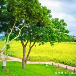 網站近期文章:台中后里環保公園。1.2公頃的金黃向日葵花海盛開中等你來欣賞