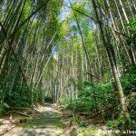 網站近期文章:迷糊步道&樂米吊橋.嘉義阿里山景點(竹林美景平緩好走好拍的親子步道)