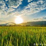 網站近期文章:大溪順時埔(寧靜純樸的農村社區有著鮮綠欲滴的稻田美麗景緻)