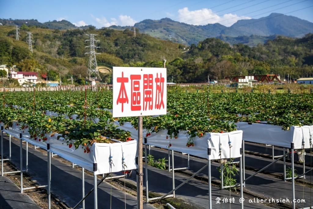 苗栗大湖草莓假期果園