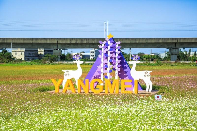 桃園花彩節楊梅場.仙草花海