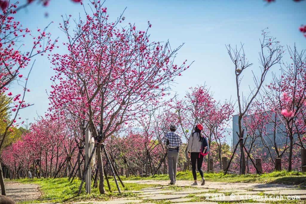 中科崴立櫻花公園.台中后里景點
