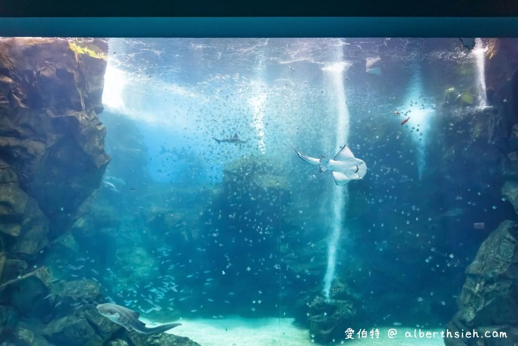 桃園XPARK水族館親子遊