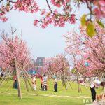 網站近期文章:檜稽河濱公園.桃園賞櫻景點(上百棵的粉紅富士櫻等你來欣賞)