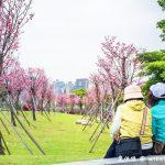 網站近期文章:檜稽河濱公園.桃園賞櫻景點(公園內種植130棵富士櫻花樹等你來欣賞)
