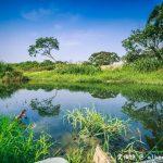 網站近期文章:大溪月眉人工濕地生態公園(園區自然生態豐富還可以淨化水質)