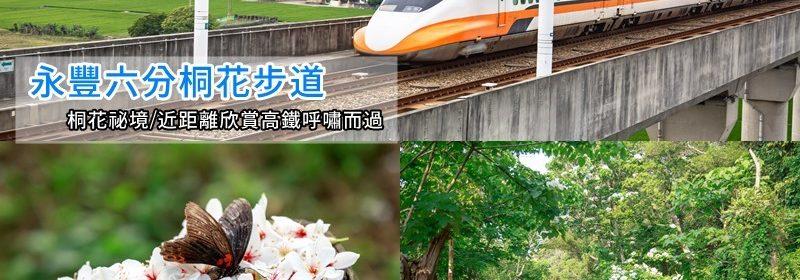 永豐六分桐花步道.台中外埔景點